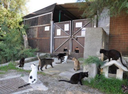 Scattano gli abbandoni al collasso canile e gattile