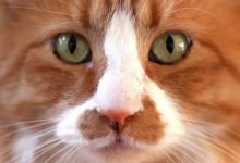 Il Gatto con gli Stivali – Fiaba Originale