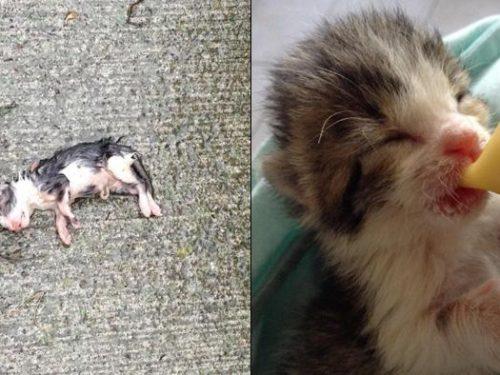 Trova un gattino appena nato sotto la pioggia e lo salva