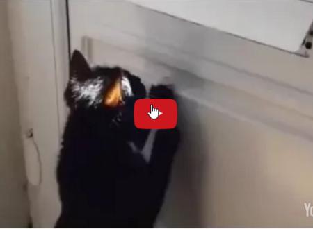 Fermate il gatto o smetteremo di consegnare la posta