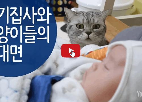 Cinque gatti curiosi incontrano per la prima volta il neonato di casa