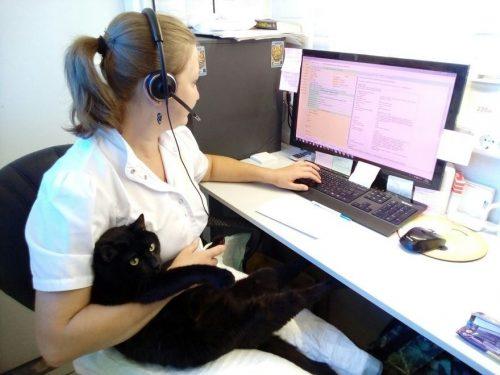 Il gatto infermiere