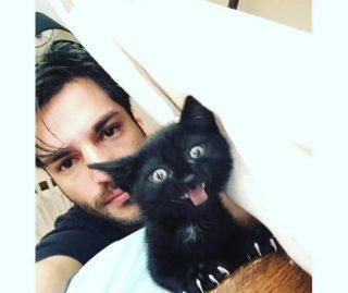 gatti-1