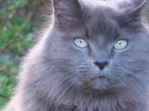 Ha ritrovato il suo gatto Moubli, dopo 11 anni