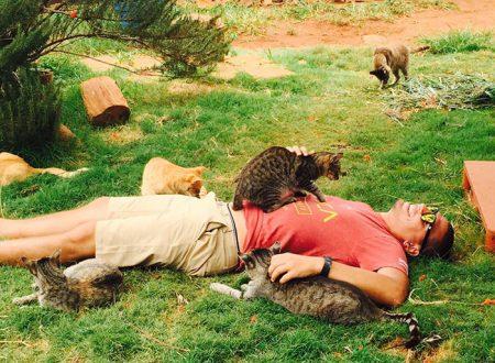 Il santuario dei gatti alle Hawaii