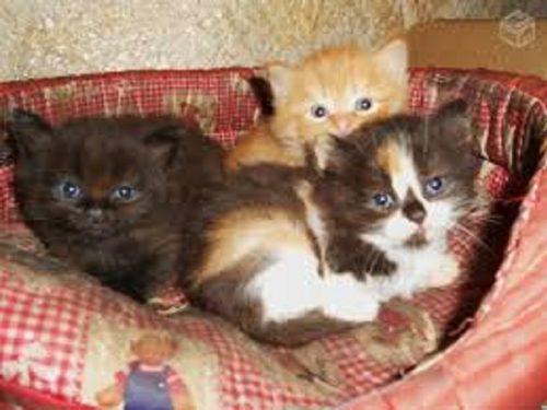 Gattini gettati vivi tra i rifiuti. Salvati all'ultimo momento