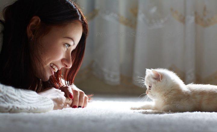 Il tempo passato con i gatti non è mai tempo perso