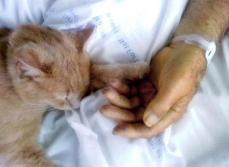 Gatto assiste con amore i pazienti dell'ospedale