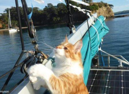 Skatty, il gatto polidattile che aiuta un uomo sordo ad andare in barca a vela