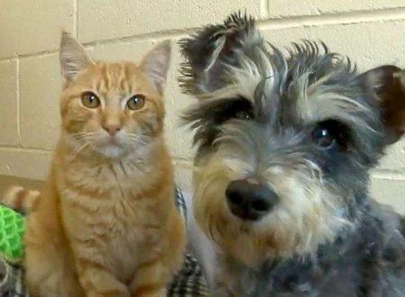 Romeo e Giulietta, un gatto e un cane innamorati in un rifugio californiano