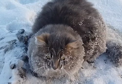 RUSSIA: Gatto rimasto bloccato nel ghiaccio salvato in extremis da una coppia.