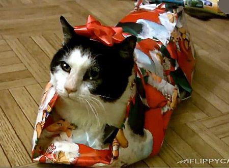 Come fare un pacchetto regalo LOL