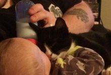 Un uomo salva un gattino, lui ora protegge il neonato di casa