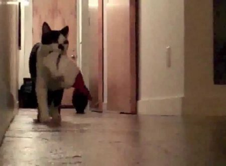Vuoi  l'albero di Natale e hai un gatto? Guarda questo video!