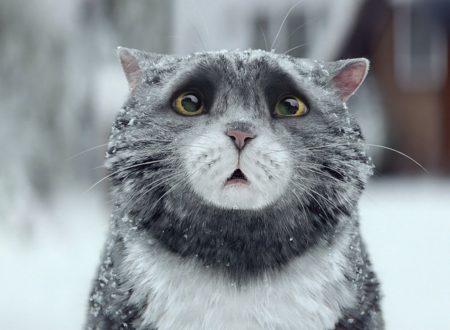 Il Pasticcio di Natale della gatta Mog