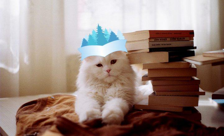 Il gatto che amava le storie