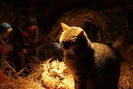 Il presepe dei gatti