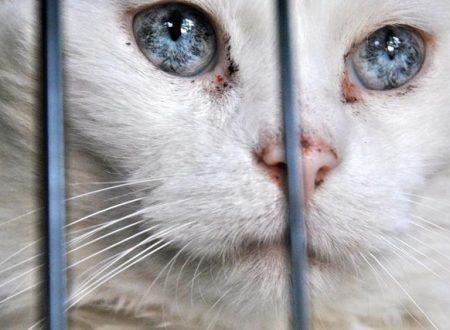 """Il gatto randagio """"inavvicinabile"""" si trasforma grazie all'amore di una volontaria"""