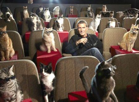 Gatti famosi nel cinema