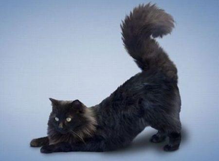 Gatti, veri maestri di yoga