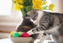 Il cioccolato: il peggior nemico per cane e gatto