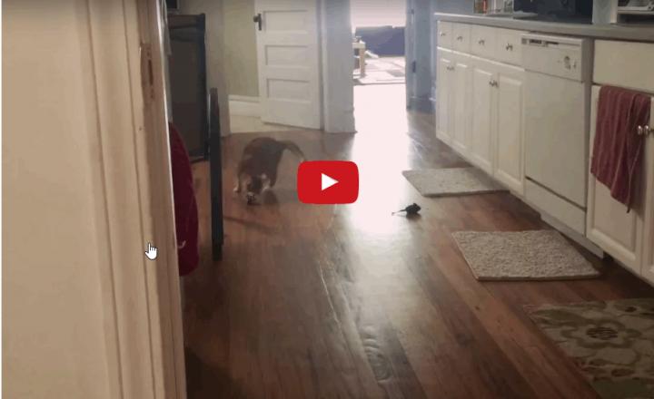 Un gatto nato cieco, ha sorpreso il suo nuovo papà umano per la sua straordinaria voglia di vivere.
