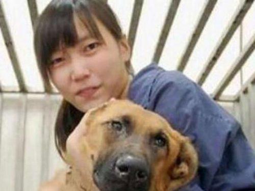 Il suicidio di una veterinaria e il problema dei randagi a Taiwan