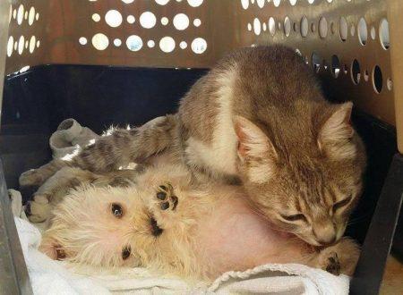 Ferita da un branco di cani non solo li perdona ma accudisce un cucciolo rimasto orfano