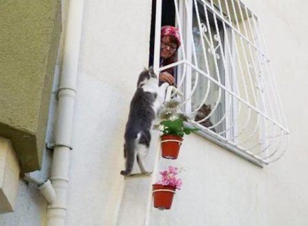 Una donna costruisce una scaletta per dare riparo ai gatti randagi