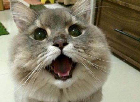 Spesso tanti problemi di convivenza tra uomini e gatti derivano da piccole frustrazioni dei bisogni del micio