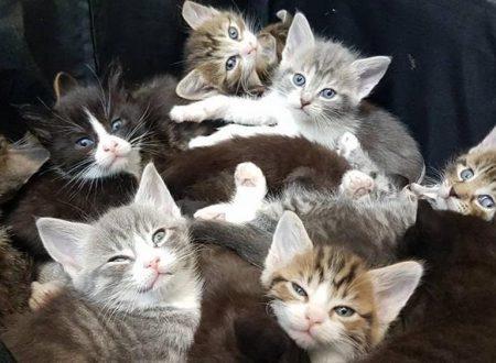 Abbandono: In un quartiere nella zona est di Londra, trovata una valigia con quindici gattini abbandonati