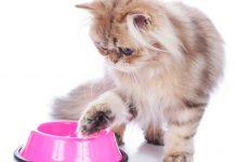 Perché a volte i gatti prendono il cibo dalla ciotola e lo mangiano per terra