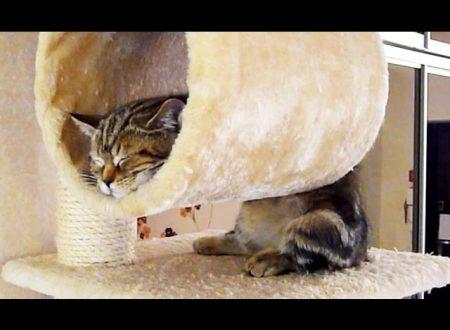 Quanto e come dormono i gatti?