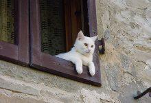 Gatto: Comportamenti e rituali che si ripetono con regolarità nella vita quotidiana