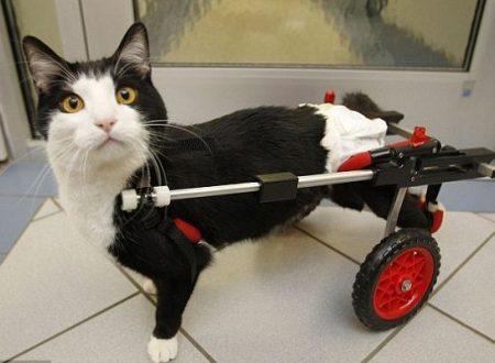 Una scelta coraggiosa ma bella vivere con un animale disabile