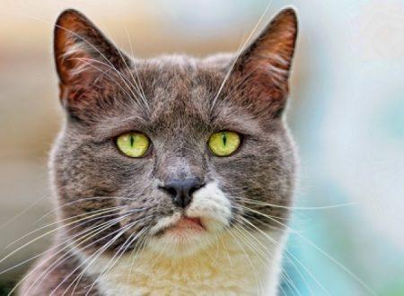 Perché il carattere del mio gatto è cambiato?