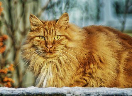 Perché il gatto è magro anche se mangia?