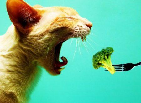 Non è affatto raro vedere un gatto mangiare broccoli