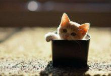 Il nostro gatto anche se ci ama non sopporta le ingiustizie neanche per amore. I sentimenti dei gatti