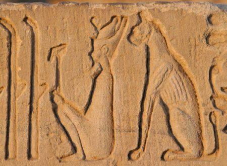 9000 anni di storia: L'origine dei gatti da assistenti agricoli ai divani di casa nostra