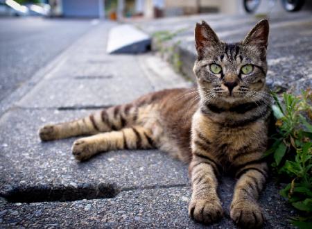 Tanti troppi gatti coinvolti in incidenti stradali. Cosa fare e cosa non fare – Pronto soccorso