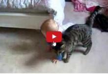 Gatto segue il suo fratellino come un'ombra