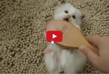 La predisposizione al gioco di un cucciolo