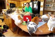 Una Cat-Lady vive con 1100 felini