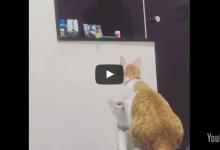 Gattino non riesce a prendere il suo giochino e chiama la mamma