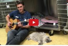"""Un medico veterinario statunitense suona e canta per calmare i sui pazienti""""pazienti""""."""