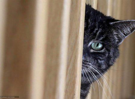 All'inizio di una relazione il nostro gatto ci studia per questo sembra evitarci