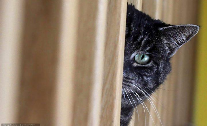 Prima di instaurare un rapporto con l'umano,  il gatto raccoglie quante più informazioni possibili, tramite l'osservazione