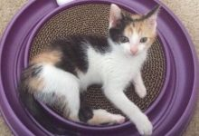 Raro gatto salvato dall'eutanasia