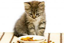 Allarme salmonella nel cibo per cani e gatti, ecco i prodotti da non toccare